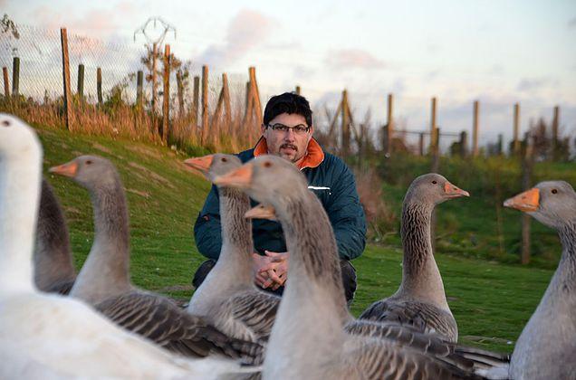 Philippe Brard et ses oies