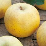 Pommes Belle de Boskoop